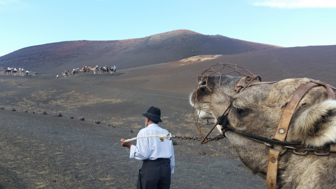 Lanzarote, Canary Islands, camel ride