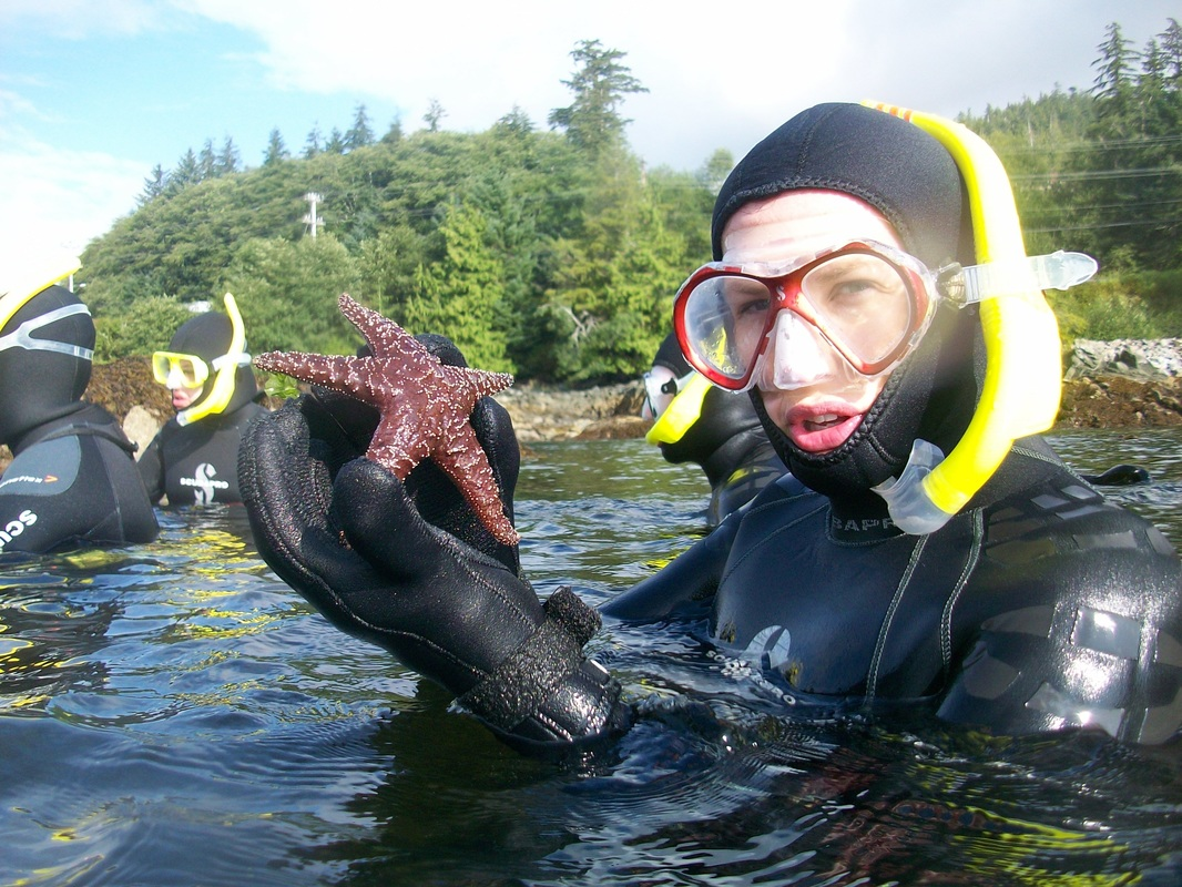 Starfish seen while snorkeling in Alaska in Ketchikan.