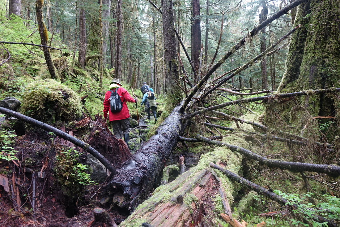 Cascade Falls hike in Tongass Forest in Southeastern Alaska with Un-Cruise Adventures.