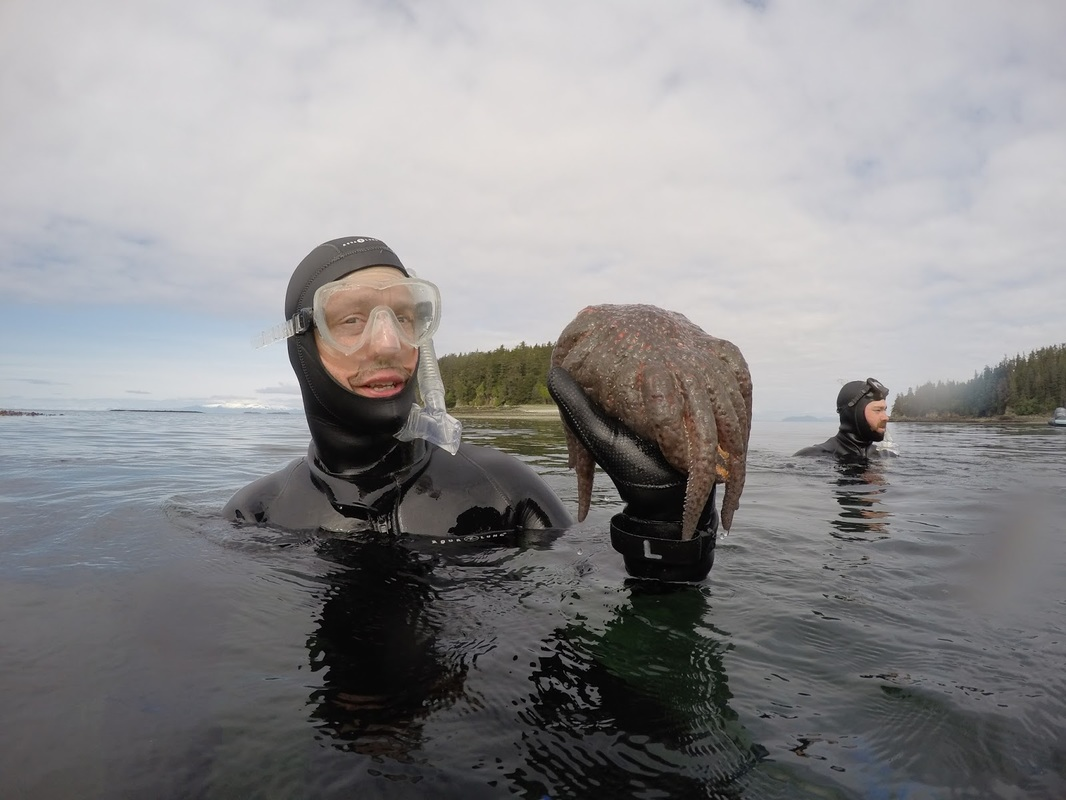 Snorkeling near Stephens Passage and Robert and Crow Islands in Alaska