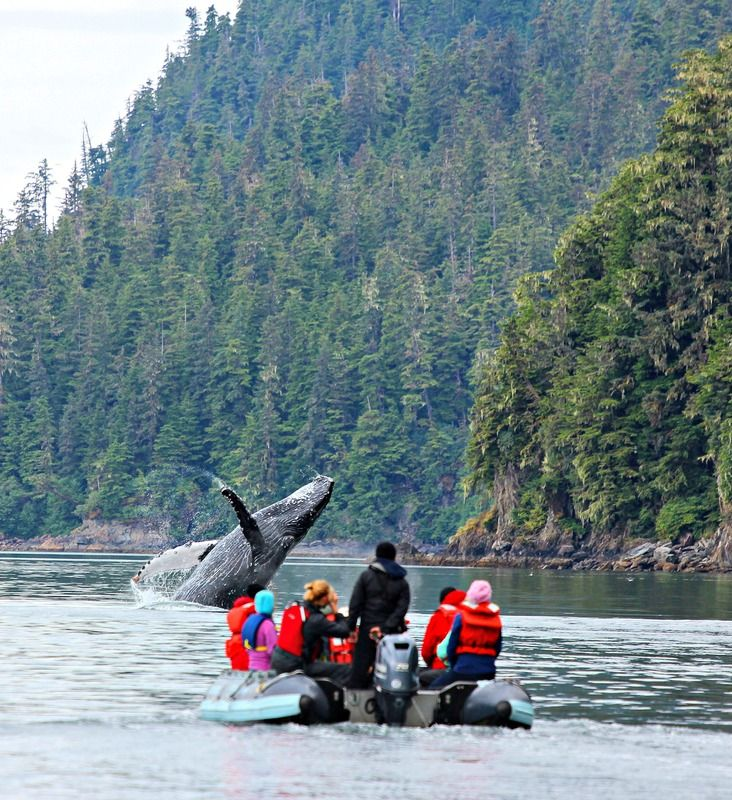 UnCruise Adventures in Alaska, whale spotting