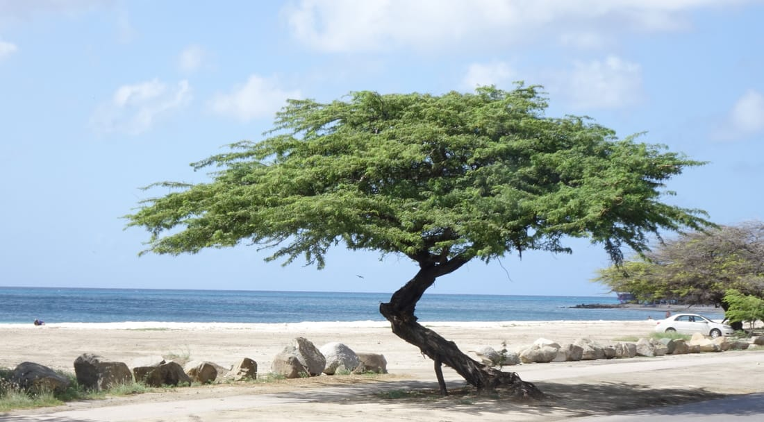 Bushiri Beach in Aruba
