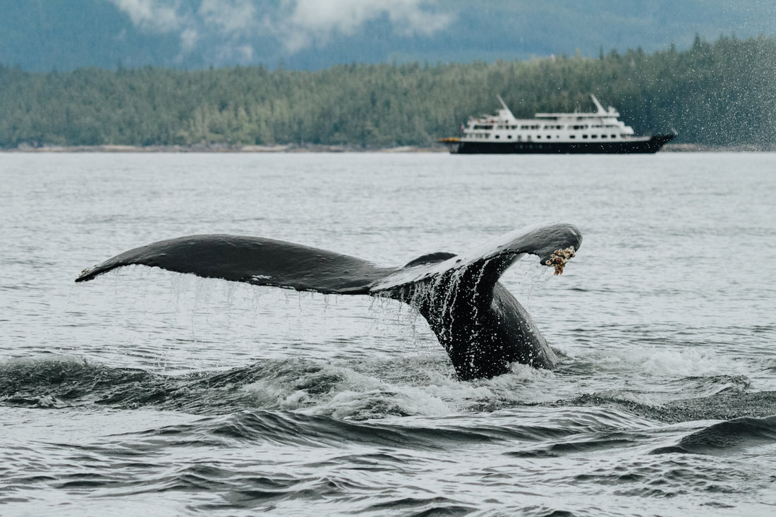 UnCruise Adventures in Alaska, whale tail